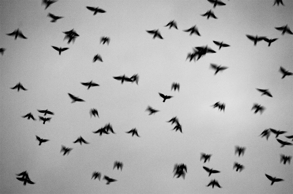 bg_birds